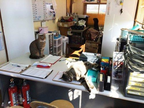 okegawa_cats_02