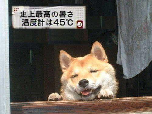 saigai_animal (3)