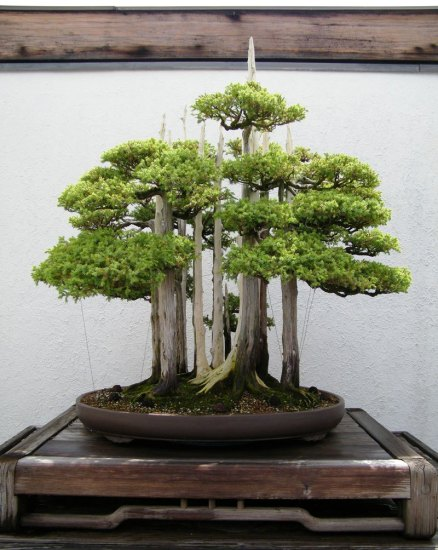 bonsai_unique (14)
