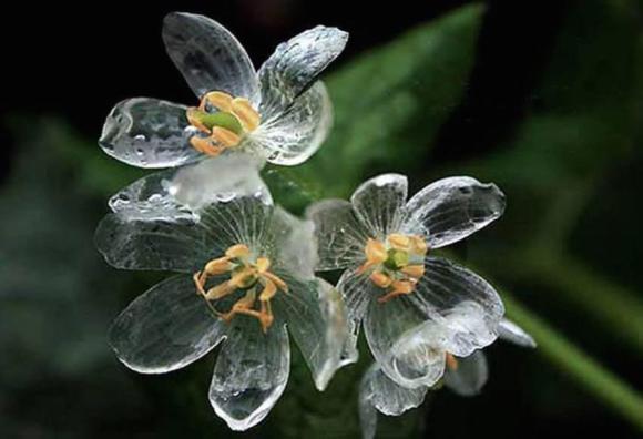 skelton_flower3