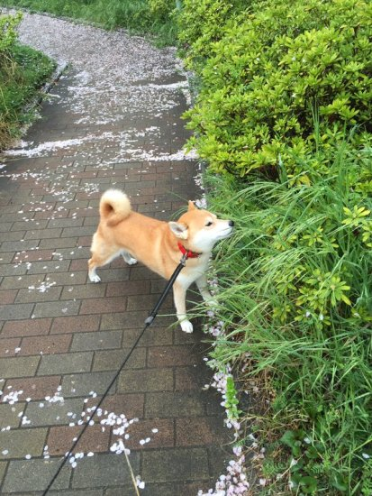 tareodog (6)