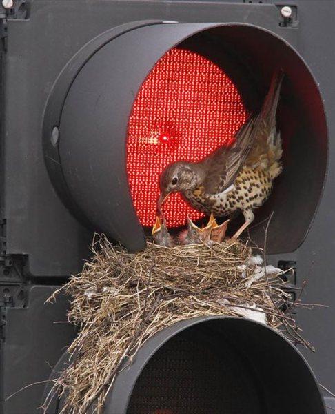 frogbird (11)