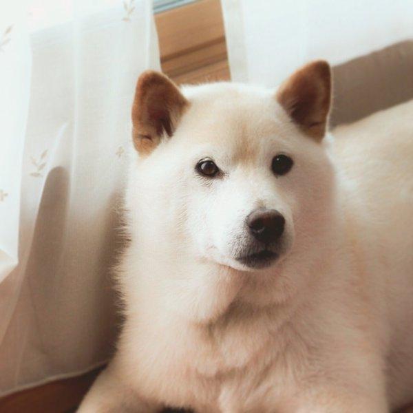 jishindog (3)