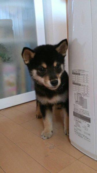 jishindog (7)