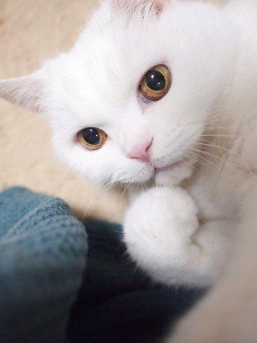 surprisingcat (11)