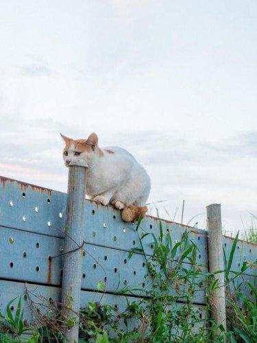surprisingcat (13)