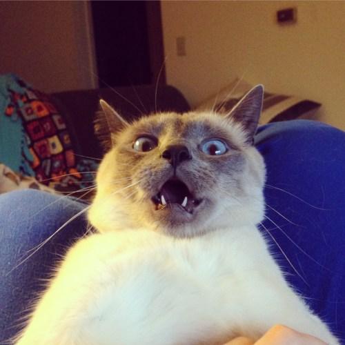 surprisingcat (16)