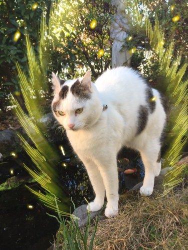 surprisingcat (4)