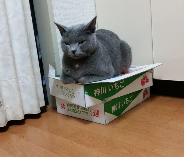 tissue_neko22