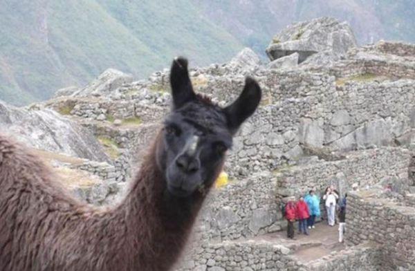 animals_selfies2
