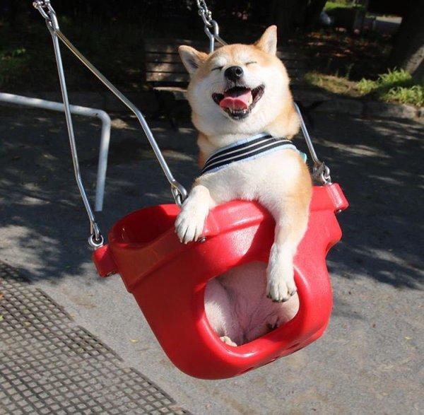 dog_swing1