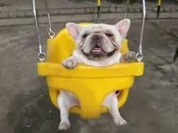 dog_swing10