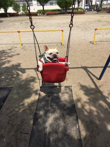 dog_swing7