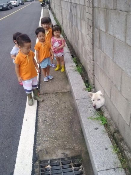dog_wall (2)