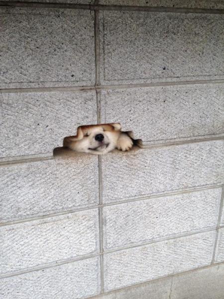 dog_wall (4)