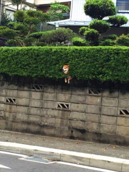 dog_wall (8)