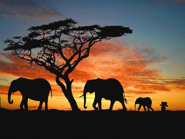 elephant_worldtrip6