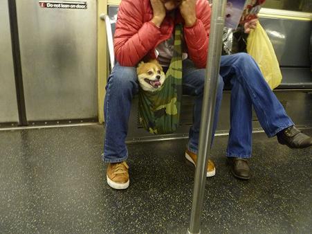 newyork_animal5