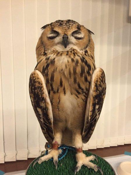 owlbag (9)