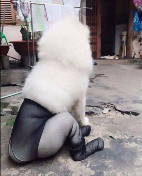 dog_taitsu (3)