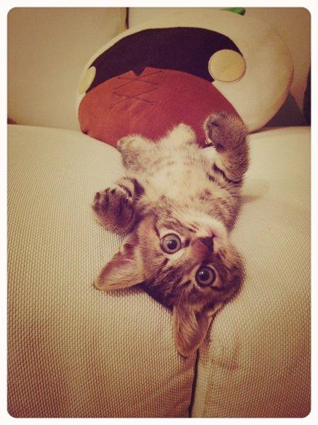 pekemongo_cat (3)