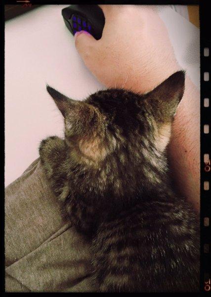 pekemongo_cat (7)