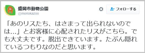 risu_sukima (4)
