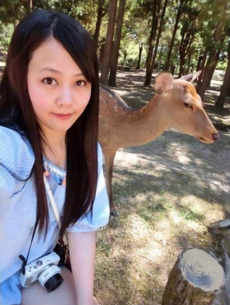 "Pic shows: Huang Qiqi with the sika deer in Nara, Japan; A viral photo has captured the moment a young woman was given a hilarious death stare by a fed up deer after she pulled out her phone to take a selfie. Huang Qiqi, the woman from Taiwan, said she was eager to ""do as Romans do"" when she recently visited the extremely popular Nara Park, which is in Nara City of Japanís central Nara Prefecture. The park is home to adorable sika deer (Cervus nippon), which are indigenous to East Asia and famous for the trademark spots on their bodies. Huang, who shared her selfie with friends on social media, said she crouched down next to the sika doe and prepared her mobile phone to take the picture. But afterwards she could not help laughing at the ""uncooperative"" animal, which seemed not at all impressed by her selfie attempt and produced the stern stare into her camera lens. The sika, also known as the spotted deer or the Japanese deer, is now something of an internet celebrity after Huangís photo went viral with more than 10,000 likes. Thankfully, the animalís reluctance to take part in the customary selfie will not stop tourists from flooding to Nara City, which has temples and iconic artwork from the 8th century, when it was Japanís capital. Subspecies of the sika deer can also be found in Taiwan, where it is a national animal."