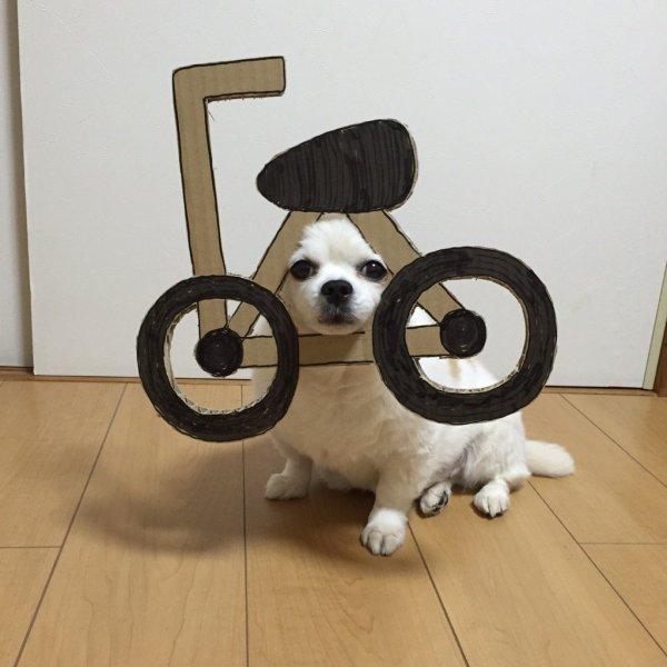danborudog-1