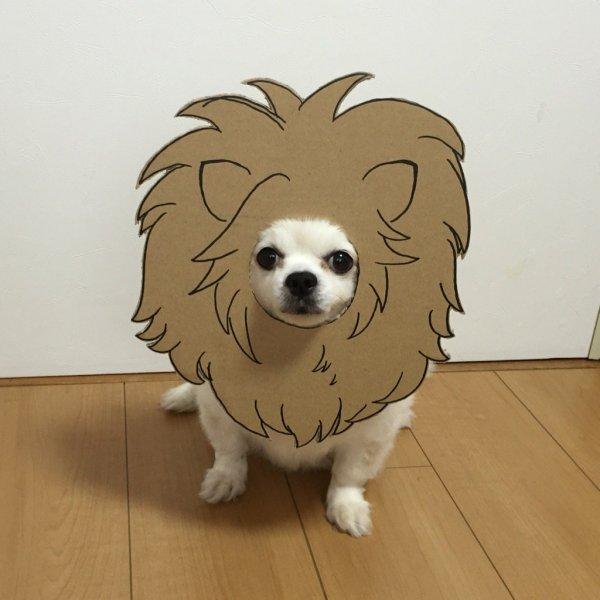 danborudog-13