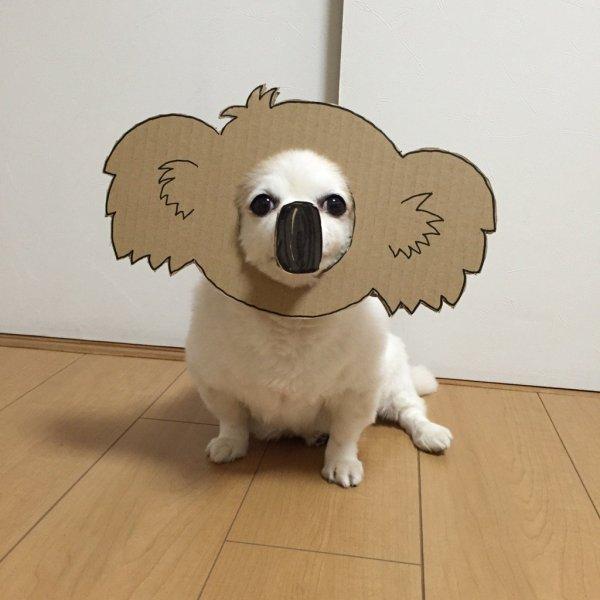 danborudog-2