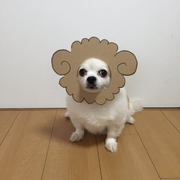 danborudog-4