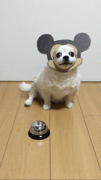 danborudog-5