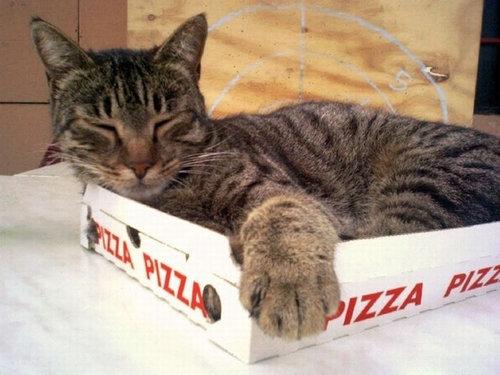 pizzacat-4