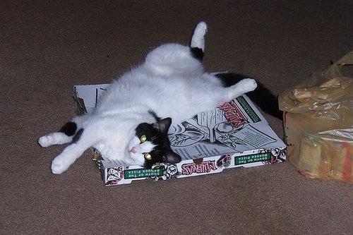 pizzacat-6