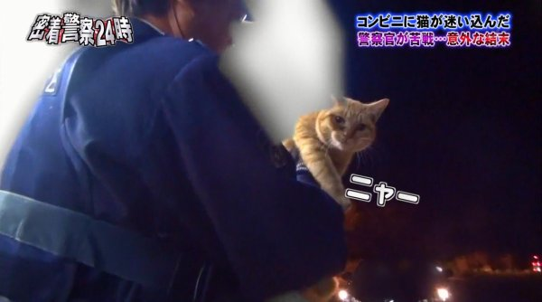 police-cat-5