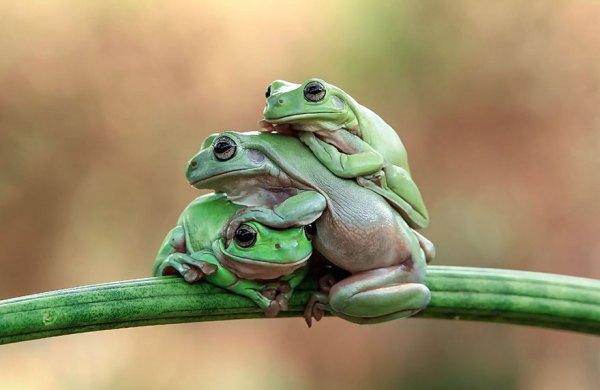 tantoyensen-frog-17