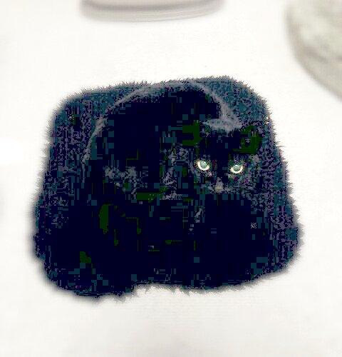 zabutoncat-1