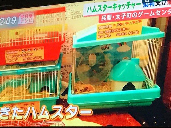 hamsterUFO (7)