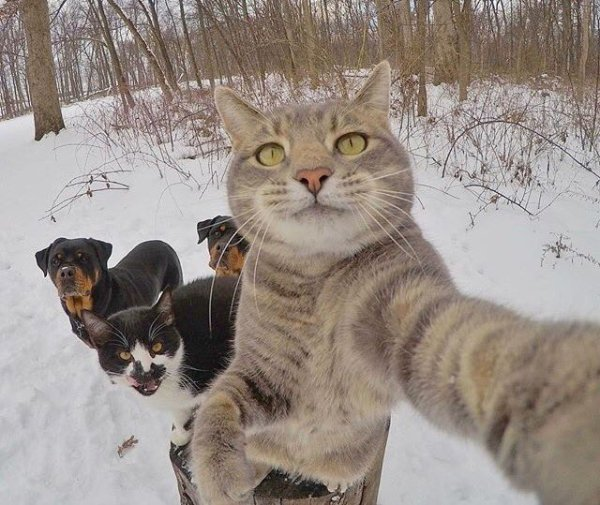 selfieanimal (12)