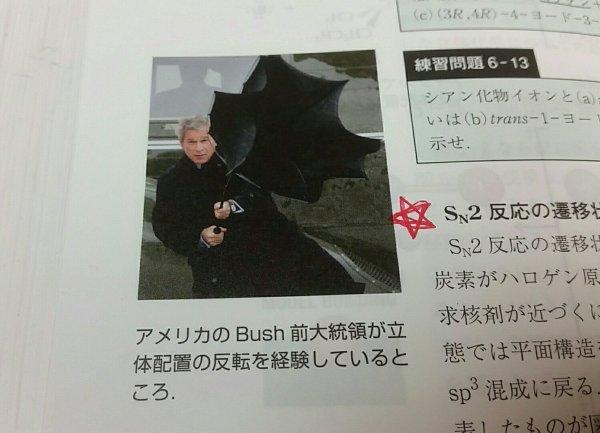 umbrella-bush (5)