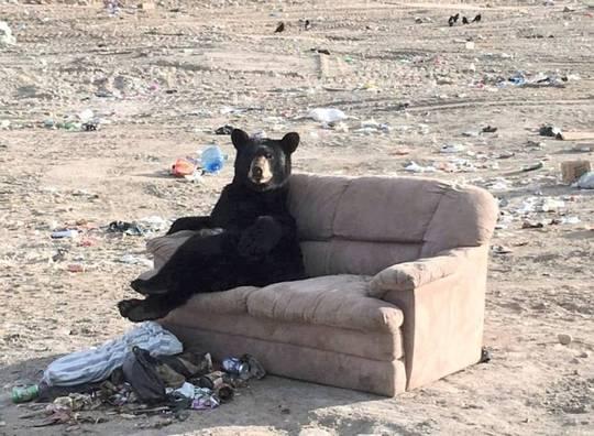 速報】ソファでくつろぐクマが激...