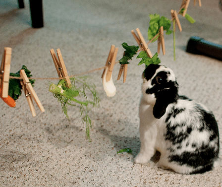 bunny-approved-toys-1.png