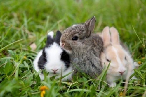 How to Bond with Your Netherland Dwarf Rabbit - Social Bunny