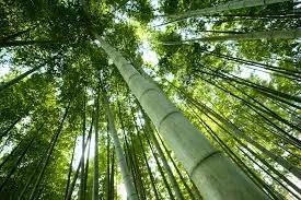 Hindi Kahani-Chinese Bamboo Story in Hindi