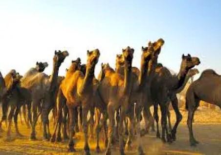 Hindi Kahani -Eighteenth camel in hindi