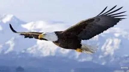 Hindi Kahani eagle and Hen