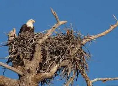 Hindi Kahani eagle nest