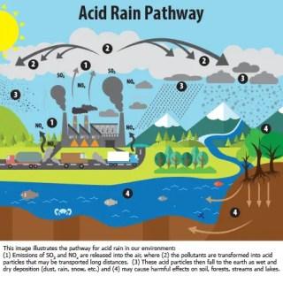 एसिड रेन Acid Rain