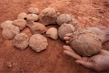 Paleontology hindi, Paleontology ki jankari, Paleontology kya hoti he, dinosaur ki study, science of study of dinosaur,